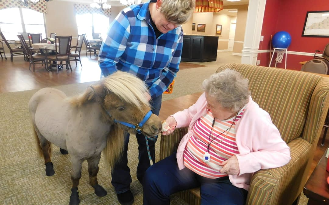 Morning Pointe Meets Farm Animals During National Agriculture Month