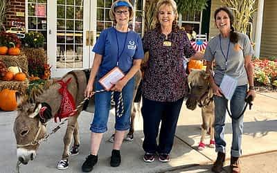 Clinton Lantern Donkeys