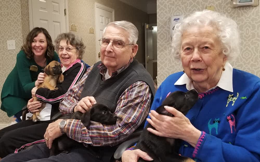 Socializing Foster Puppies Benefits Dogs, Morning Pointe Residents