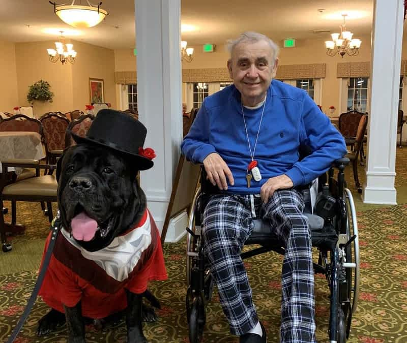 Therapy Dog Brightens Morning Pointe Residents' Day