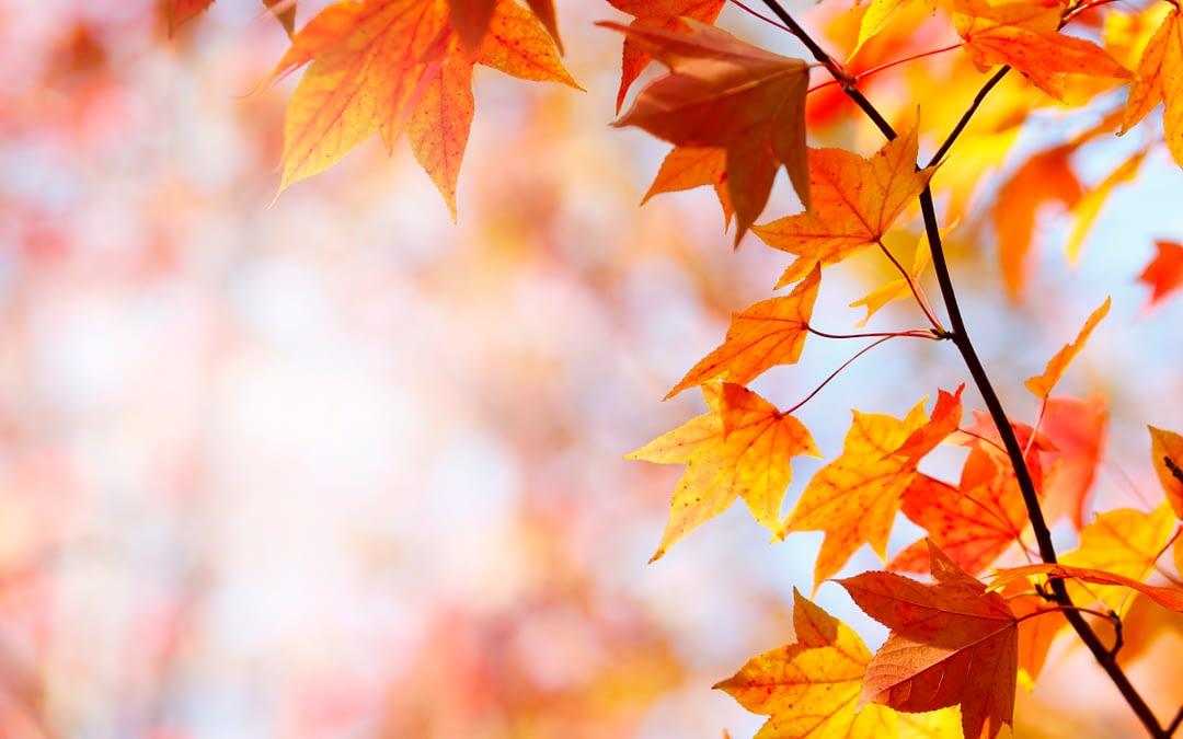 """Morning Pointe Hosts """"Fall Festival Family Night"""" Oct. 26"""