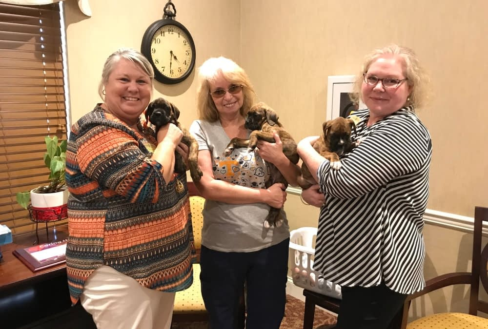 Pet Therapy Brings Comfort to Morning Pointe Residents