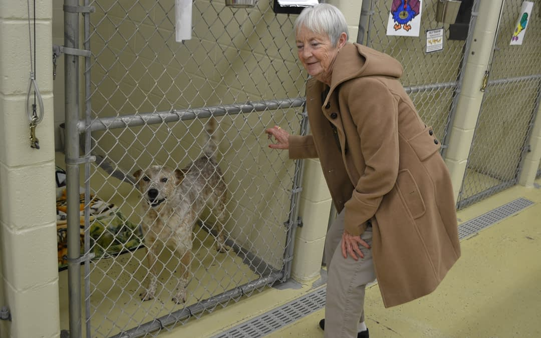 Morning Pointe Residents Hang Doggie Decorations at Local Animal Shelter