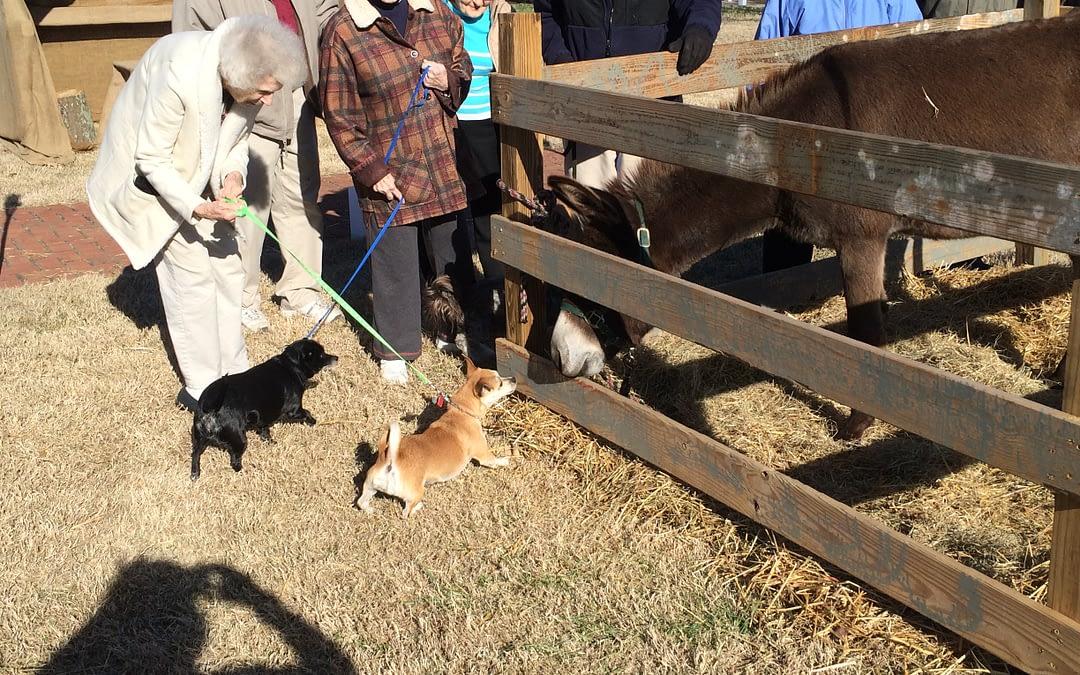 Morning Pointe Seniors Visit 'Nativity' Animals
