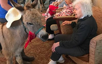 Miniature Horses Provide Pet Therapy at Morning Pointe
